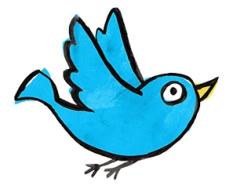 bird_320
